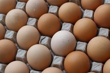 Algunos apuntes generales sobre el huevo