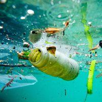 Veracruz se convierte en el primer estado de México en aprobar una ley para disminuir el uso de popotes y plástico