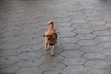 Alguien ha perdido un perro