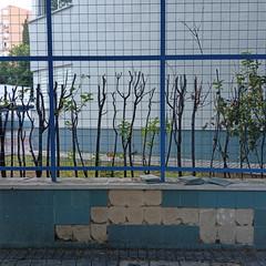 Foto 22 de 38 de la galería fotos-tomadas-con-el-realme-6s en Xataka Móvil