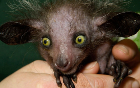 Porqué hay que adorar a los 10 animales más feos del planeta