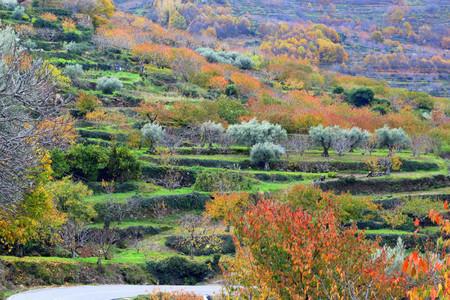 Recomendaciones para visitar el Valle del Jerte en otoño