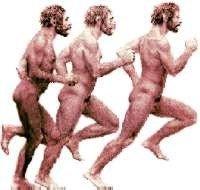 Evolución humana tardía