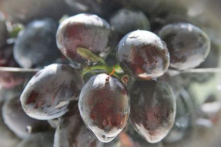 Las uvas contienen propiedades antimanchas
