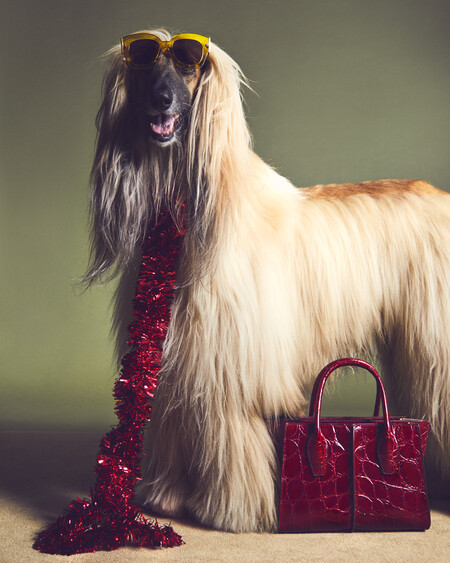 Tod S 2020 A Pawfect Holiday 1