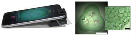 Smartphone Microscope And Sample Image