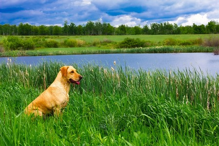 Algunas algas tóxicas pueden enfermar a tu perro si permites que se bañen en un algunos lagos