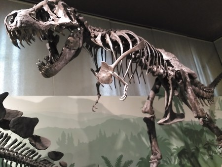 Museo Civico Storia Naturale Milano