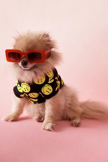Zara Pet Smiley Collection 01