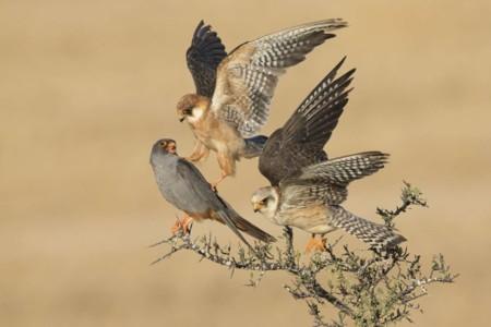 Birds Company Of Three Amir Ben Dov Israel