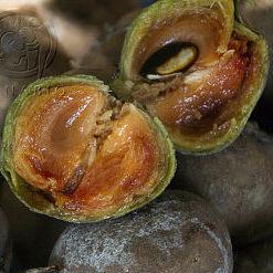 Estos son los beneficios del Chicozapote, qué es y cómo prepararlo. Fruto de la gastronomía ancestral de México