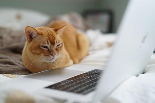 22 sitios web inútiles pero perfectos para procrastinar cuando estás aburrido