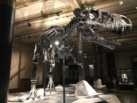 Dinosaur 2368475 1920