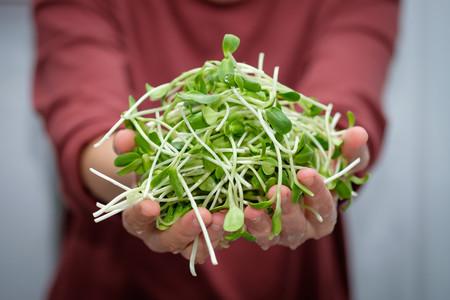 Qué son los germinados, cuáles son sus beneficios y cómo podemos hacerlos en nuestra propia casa