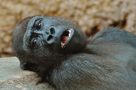 Monkey 1346590 1920