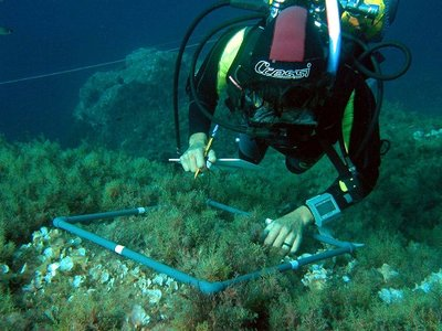 El calentamiento del agua pone en peligro los bosques de algas