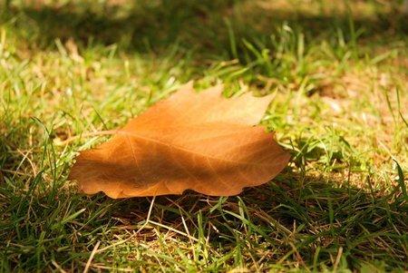 Especial de otoño en Directo al Paladar