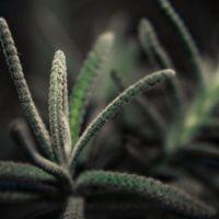 El 21% de todas las plantas conocidas están en peligro