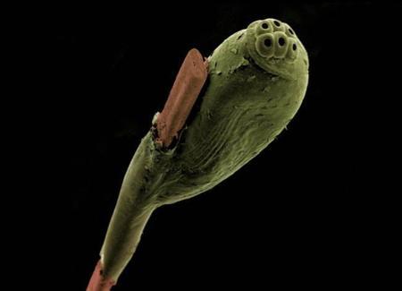 Fotografía microscópica