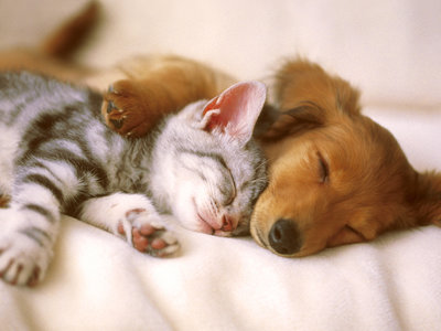 Google Fotos creará vídeos con las mejores fotos de tus mascotas