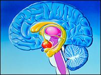 Estimulación eléctrica puede mejorar la memoria