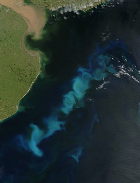 Phytoplankton Soatlantic 20060215