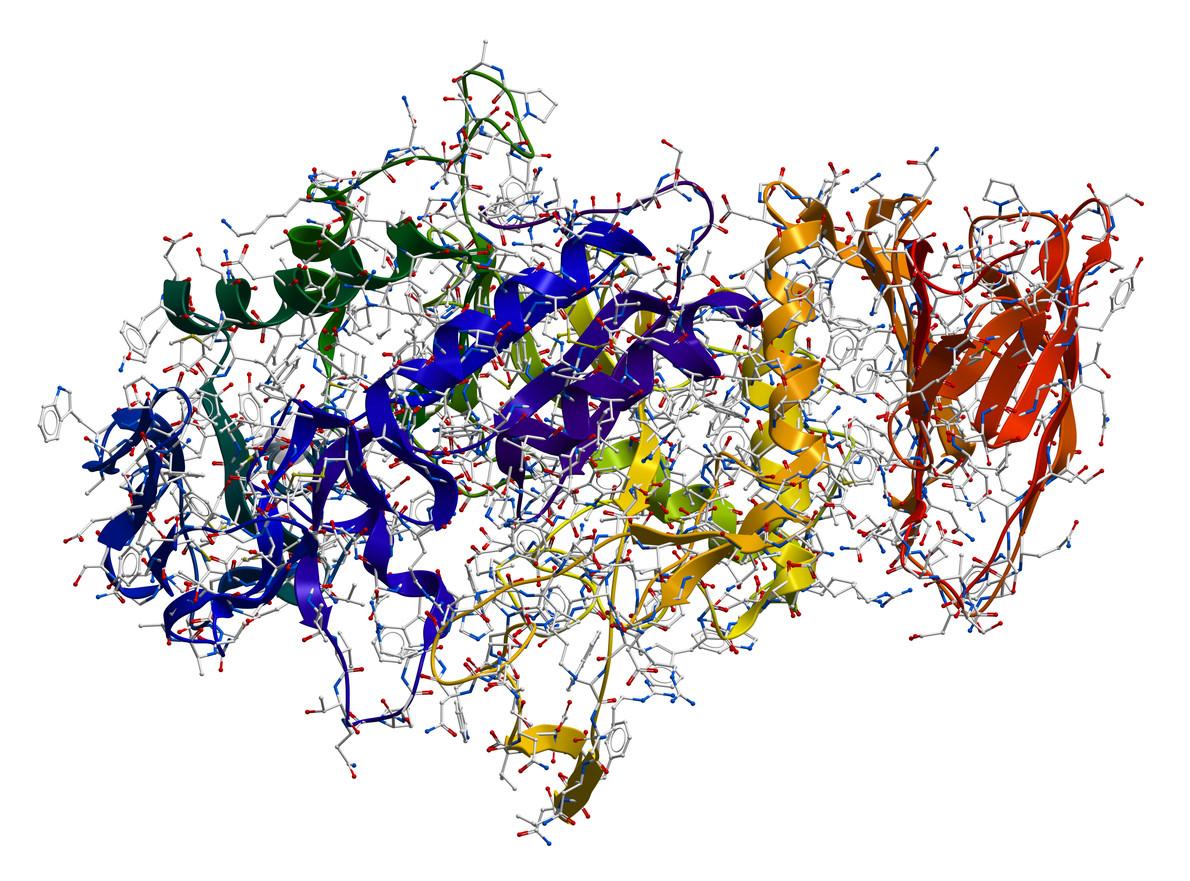 la enzima prodigiosa sirve para adelgazar