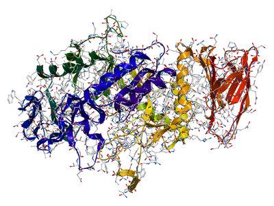 Para qué sirve una enzima y la falacia de la enzima prodigiosa