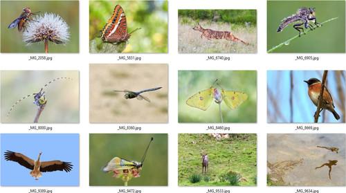 Biodiversidad virtual, identificando las especies de tus fotos de naturaleza