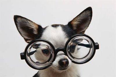 La visión canina (y II)