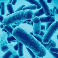 Los probióticos son en general inútiles y en realidad pueden dañarte