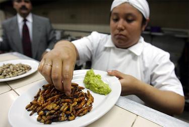 Los insectos comestibles en México, un mercado que se mantiene vivo