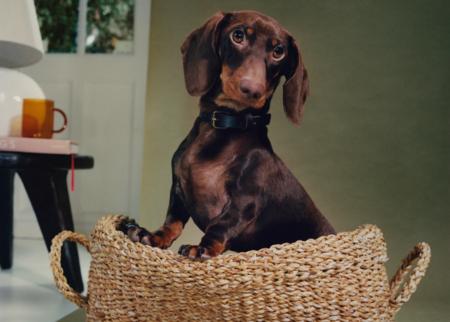 Zara Home lanza una colección para mascotas que hará de nuestro perro el más consentido en la mañana de Reyes