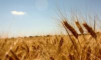 Las materias primas se consolidan como alternativa de inversión