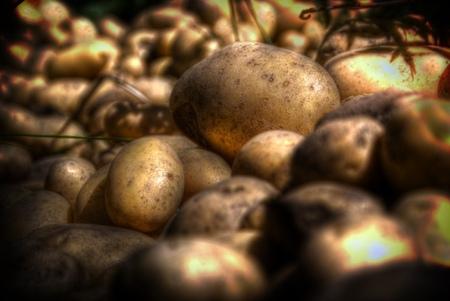 Patatas tóxicas y chuños