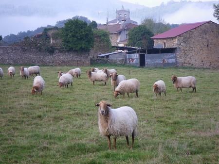 Inteligencia artificial que detecta si una oveja está enferma