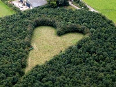Un bosque en forma de corazón: el gesto más romántico que emociona en las redes sociales