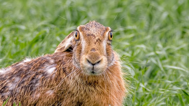 Hare Field 2246752 1280