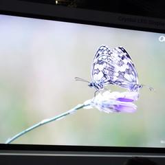 Foto 5 de 25 de la galería sony-crystal-led en Xataka