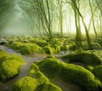 Los bosques más mágicos del mundo