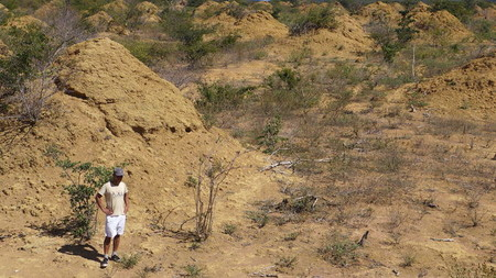 Descubren en Brasil una red de termiteros del tamaño de Gran Bretaña y son tan antiguos como las pirámides