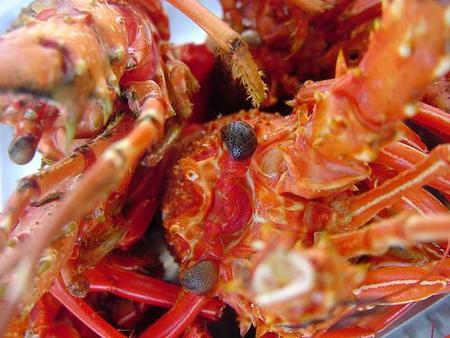 La langosta, cómo escoger ese crustáceo exquisito