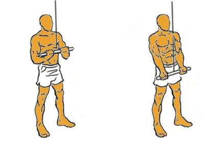 Guía para principiantes (LVIII): Extensión de tríceps en polea alta, agarre invertido