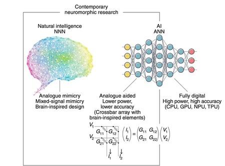 Copiar Cerebro