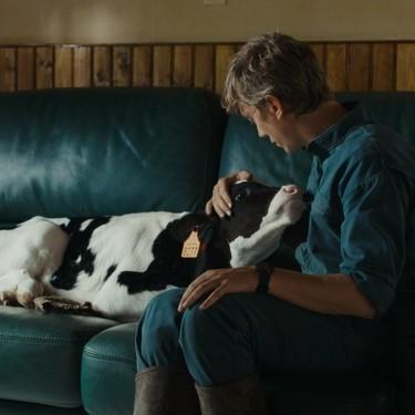 'Un héroe singular': un drama tan realista e intenso que acaba siendo una tortura para cualquier amante de los animales