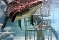Nadando con cocodrilos en Sudáfrica