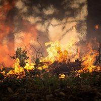 Quemar animales vivos para incendiar el Vesubio: lo último de la mafia para recalificar vertederos