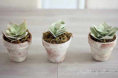 DIY: las plantas suculentas más bonitas del mundo