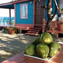 Foto 4 de 15 de la galería bird-island-mini-isla-en-belice en Diario del Viajero