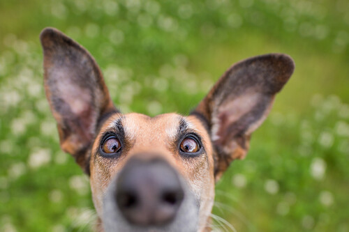 Es difícil no sonreír con las fotos de mascotas finalistas del concurso Mars Petcare Comedy Pet Photography Awards 2020